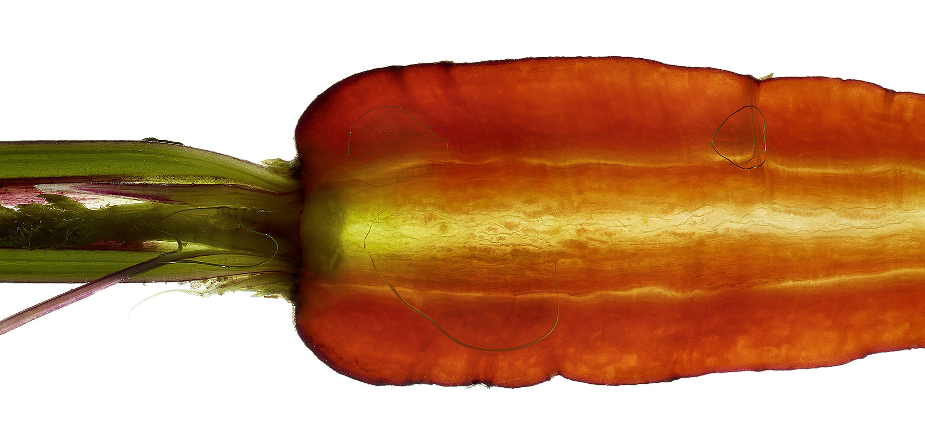 Genome_Carrot2_76193