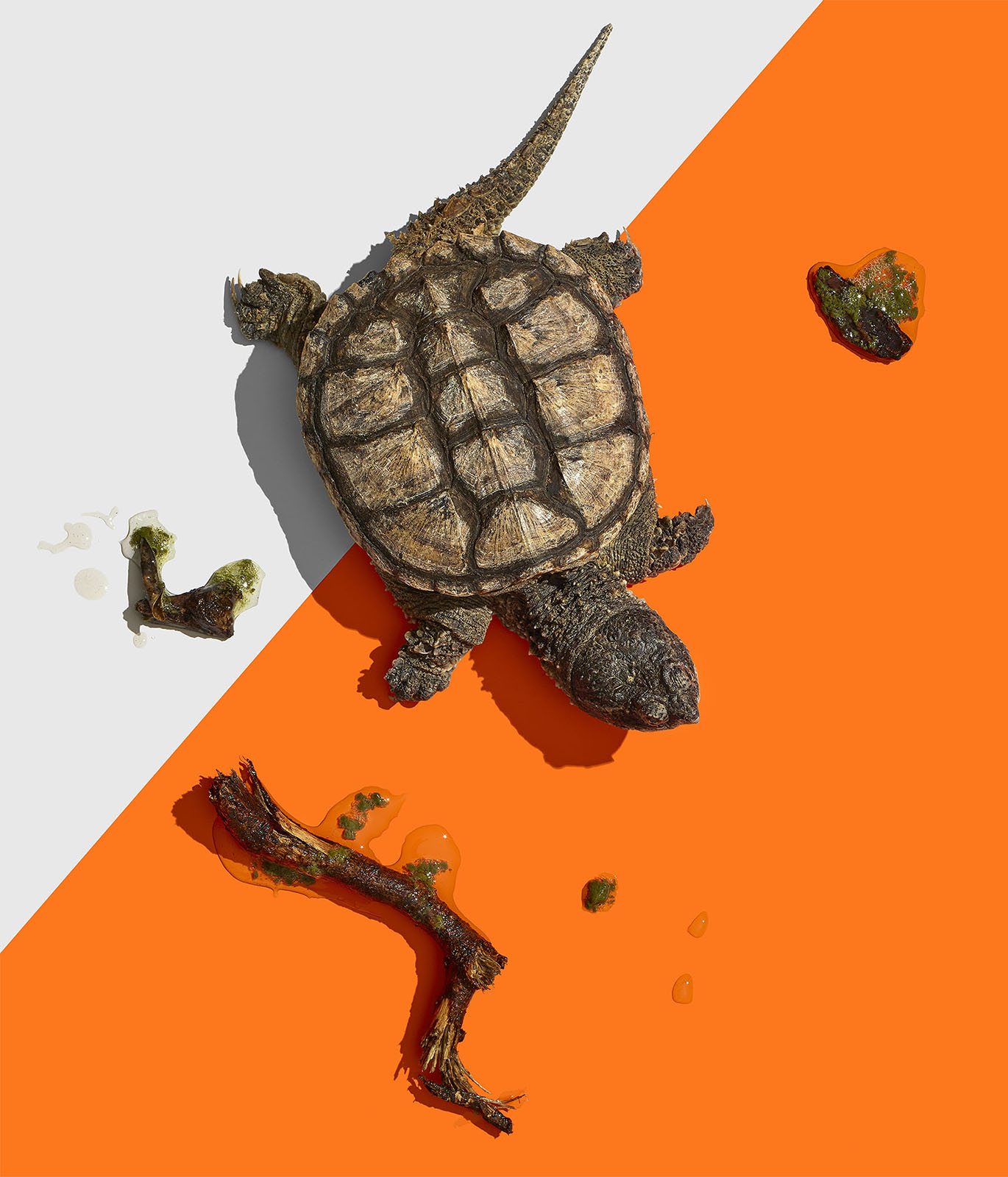 WEB_FS_SummerGuide_Turtle_01